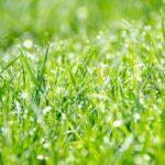 Sattgrüner Rasen mit Tautropfen und Lichteinfall